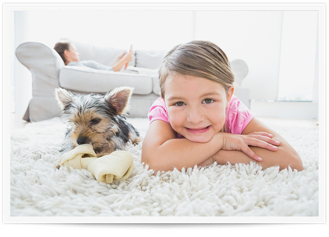 Pet Urine Removal Service in Bemidji